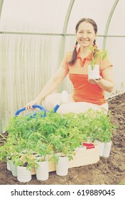 woman with tomato seedlings in pots  at hothouse