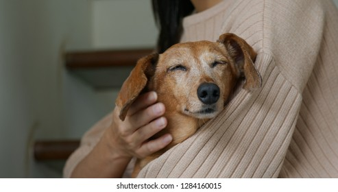 Woman touch on her dog at home