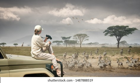 Woman tourist on safari in Africa, traveling by car in Kenya and Tanzania, watching zebras and antelopes in the savannah.
