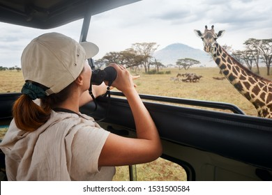 Woman tourist on safari in Africa, traveling by car with an open roof of Kenya and Tanzania, watching giraffes and antelopes in the savannah.