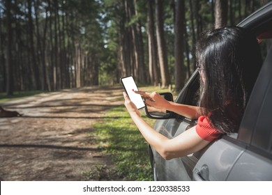 woman tourist searching place from smartphone in car while travelling in pine forest