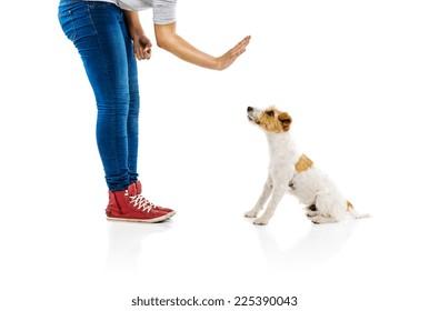 Woman training dog isolated on white background