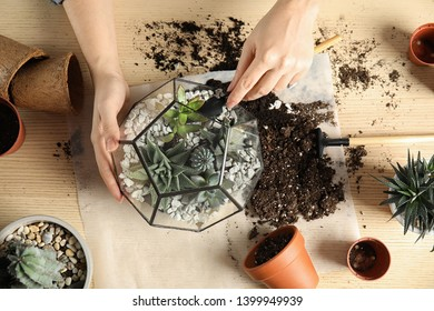 Woman transplanting home plants into florarium at table, top view