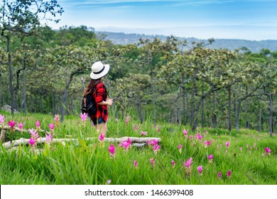 Woman traveler with backpack enjoying at Krachiew flower field, Thailand. Travel concept.