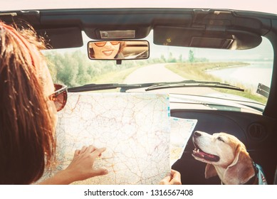 Woman traveling with her beagle dog by Convertible car and planning itinerary using the paper map in the bright sunny day