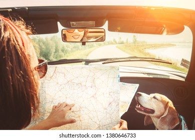 Woman traveling with her lovely beagle dog by convertible car and planning itinerary using the paper map in the bright sunny day