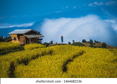Woman travelling in Asia, standing in rice paddies in Thailand, freedom feeling, explore