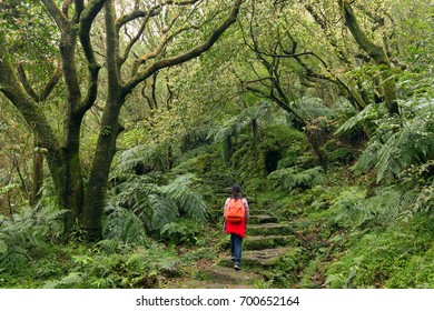 Woman trekking in the subtropical forest of the Yangmingshan National Park, climbing stone stairs, Taipei, Taiwan
