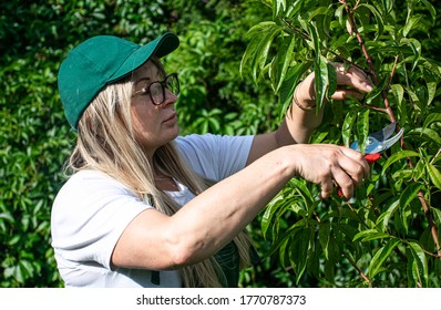 Woman trimming a tree and using scissors in orchard.