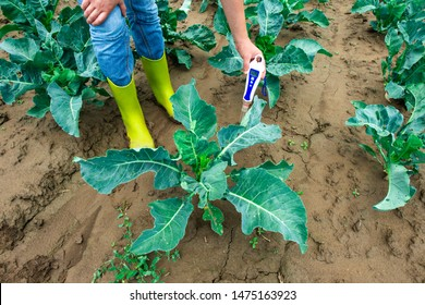 Woman use digital soil meter in the soil. Cabbage plants. Sunny day. Plant care in agriculture concept.
