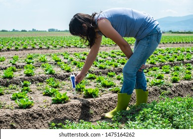 Woman use digital soil meter in the soil. Lettuce plants. Sunny day. Plant care in agriculture concept.