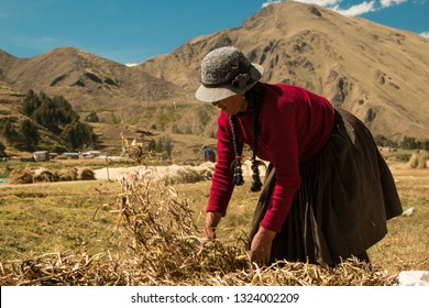 Woman in the village of Marangani working with agriculture. Wearing traditional Peruvian clothing. Year 2017.
