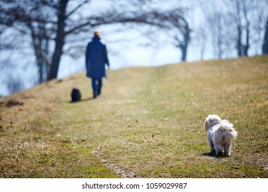 Woman walking away with dog looking from behind sad waiting