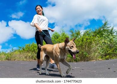 青い空を背景に道を茶色の犬と歩く女性