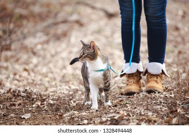 Woman walking  cat on a leash outdoors in nature
