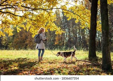 Frauenhund im Herbstpark. Weiblicher Haustierbesitzer, der den sonnigen Tag im Freien genießt. Hundewanderung in der Herbstsaison