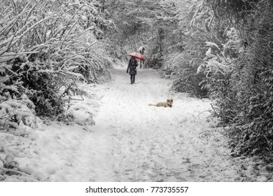 a woman walking the dog on a snowy day