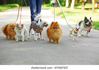 Image of: Benefits Woman Walking Dogs In Park Vanillapup Walking Dog Images Stock Photos Vectors Shutterstock