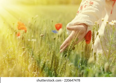 woman walking in a field of poppies and wheat touching them with sun rays on summer day copy space background