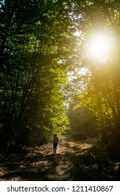 Woman walking in the florest over sunshine