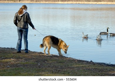 A woman walking her dog down by the lake.