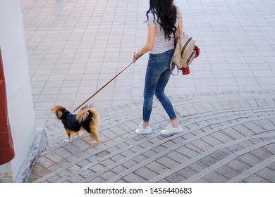Woman is walking with her dog on a leash. Funny spaniel mutt in summer city.