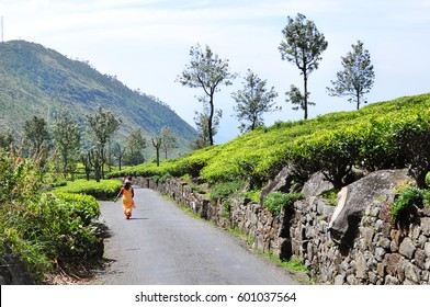 Woman walking in Lipton's tea estate road