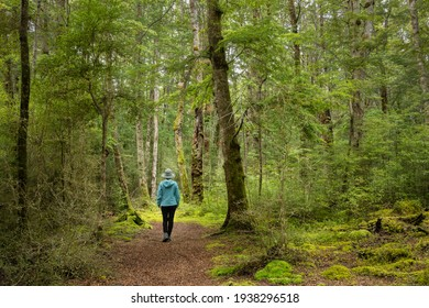 Woman walking in the lush green beech forest of Lake Mistletoe track, Fiordland National Park, New Zealand