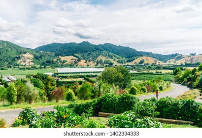 Woman walking on windy road, through vineyards and winery. Dramatic perspective of valley and sky. Green landscape with windy road. Shot in Riwaka town, Abel TasmanSouth Island, New Zealand, NZ