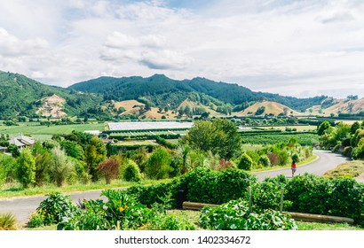 Woman walking on windy road, through vineyards and winery. Dramatic perspective of valley and sky. Green landscape with windy road. Shot in Riwaka town, Abel TasmanSouth Island, New Zealand