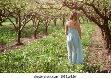 Woman walking in a orchard. Peace and harmony