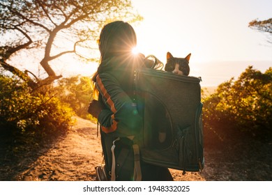 Woman walking outdoors in nature with her lovely cat in backpack carrier at sunset. Funny cat looks out of the portable and foldable pet backpack or carrier bag. Travel with pets. High quality photo