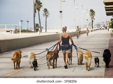 woman walking ten dogs