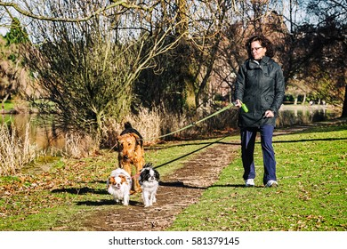 Woman walking three dogs in a park on a sunny day