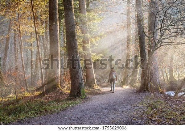 Woman walking through misty autumn forest with sunrays. Concept of Hiking, Relaxation, recreation.