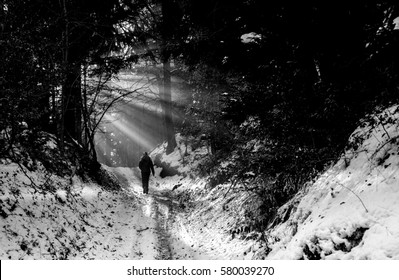 Woman walking through misty forest at sunrise