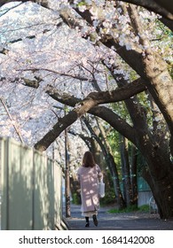 Woman is walking under the cherry blossoms in Tokyo, Japan.