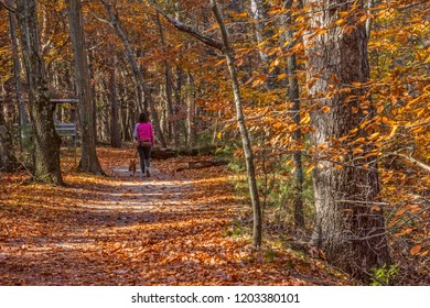 A woman walks the dog on this park trail in Smith woods in Burlington County New Jersey.