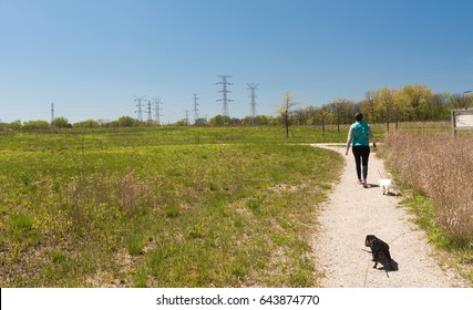 Woman walks with her dogs in the park