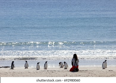 Woman watching the Gentoo penguins, Saunders, Falkland Islands, Malvinas