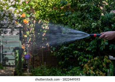 Woman watering the garden with a gardenhose.