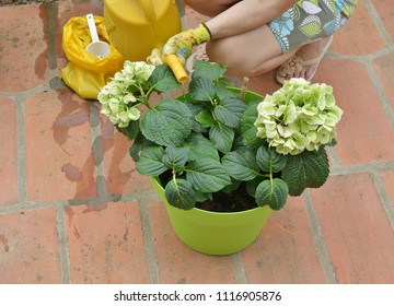Woman watering lash garden flowers in a green pot