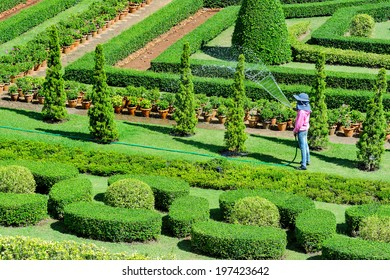 Woman watering the plants in garden.
