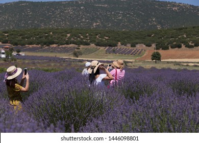 the woman wearing colorful dress and wicker hat in the lavender field take photo.