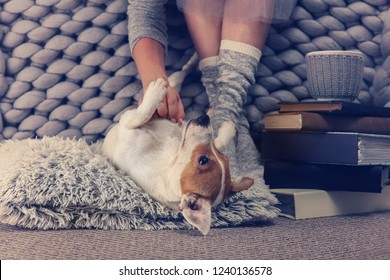 Woman wearing cozy warm wool socks relaxing at home, playing with dog, jack Russel terrier. Soft, comfy lifestyle.