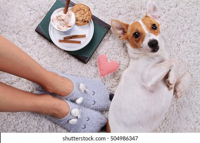 Woman wearing cozy warm wool socks relaxing at home, playing with dog, jack Russel terrier, drinking cacao, winter morning concept, top view. Soft, comfy lifestyle.