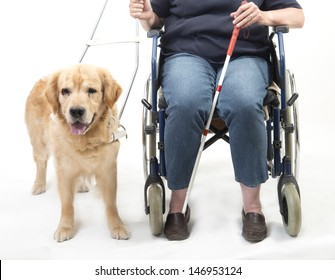 Woman in wheelchair with guide dog isolated on white