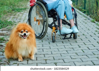 A woman in a wheelchair walks with her dog outdoor.
