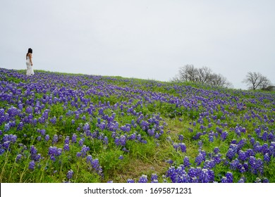 Woman in a white dress standing on a hillside covered with Texas bluebonnet wildflowers in bloom