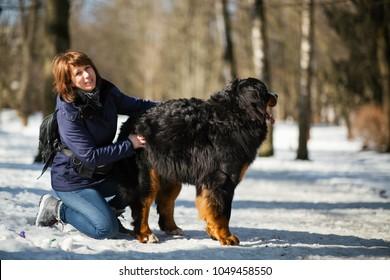 Woman in winter coat stroaks the Bernese Mountain Dog standing in the park covered with snow